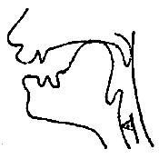 Артикуляционный уклад звука «Г-К» в картинках