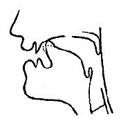 Артикуляционный уклад звука «Р» в картинках