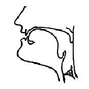 Артикуляционный уклад звука «С-З» в картинках