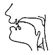 Артикуляционный уклад звука «Т-Д» в картинках